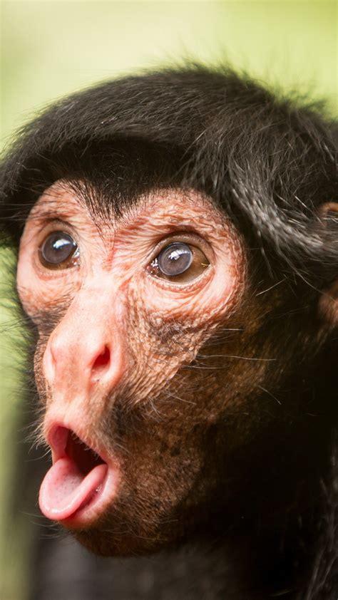wallpaper chimpanzee monkey cute animals funny animals