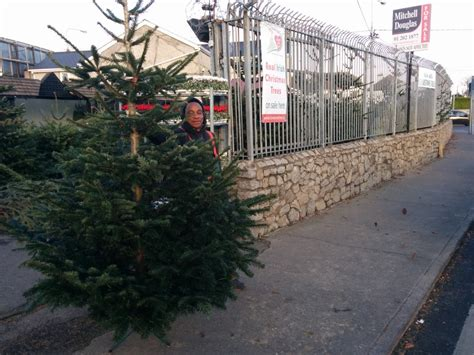 best 28 local christmas trees for sale christmas tree