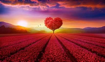 4k Field Heart Tree Wallpapers Backgrounds Deviantart