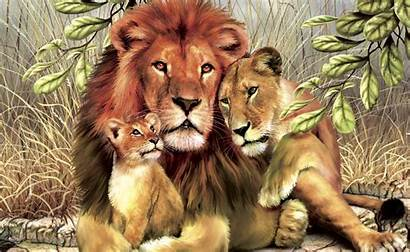 Lion Wallpapers Artistic Backgrounds Psd Graphic Stunning