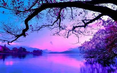 Purple Sunset Tree Nature Wallpapers Water Cherry