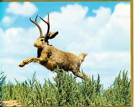 Image result for jackalope