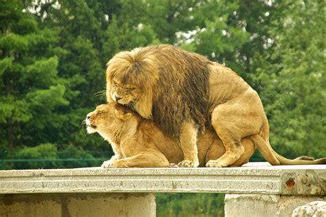 Seifried Breakfast Club : African Lion Safari 2011