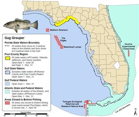 gag fishing grouper gulf season waters federal state mexico open recreational map regulations across saltwater groupers june most ocala myfwc
