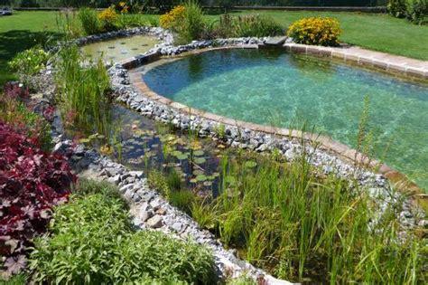 naturpool oder schwimmteich naturpool oder schwimmteich gartengestaltung zangl
