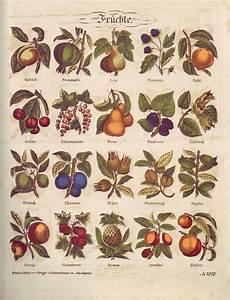 Arbre A Fruit : liste des arbres fruitiers wikip dia ~ Melissatoandfro.com Idées de Décoration
