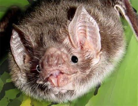 interesting bat facts  interesting facts