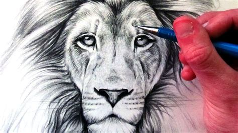 draw  lion youtube