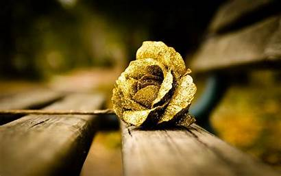 Gold Rose Flower Mood Wallpapers Golden Roses