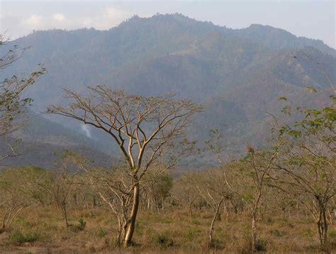 Dry tropical forest - bosque tropical seco; Yoro, Honduras ...