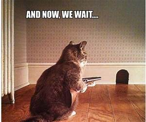 Funny Dogs With Guns Related Keywords & Suggestions ...