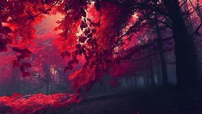 Forest Desktop Wallpapers Wallpapersafari Code
