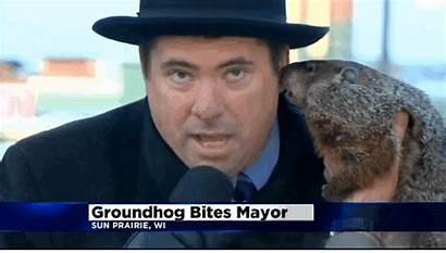 Groundhog Mayor Wisconsin Jimmy Ear Gifs Sun