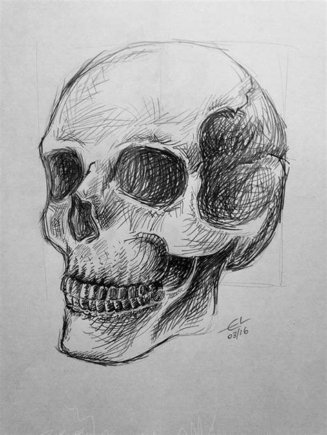 skull pencil drawing skulls drawing