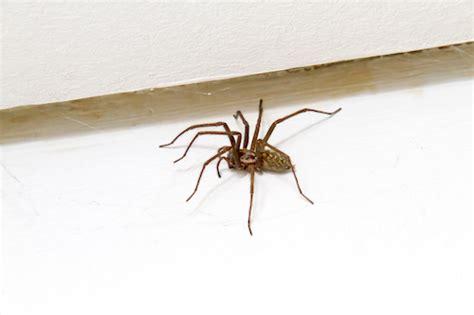 araignee dans la maison 5 astuces pour chasser les araign 233 es