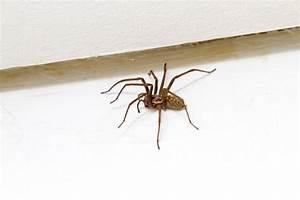 Se Débarrasser Des Araignées : 5 astuces pour chasser les araign es ~ Louise-bijoux.com Idées de Décoration