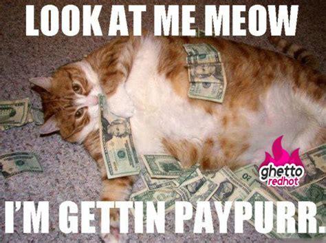Money Meme - look at me meow cat meme cat planet cat planet