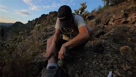 extra footage cholla cactus attack motion