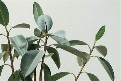 Indoor Trees Plants Tropical Tree Rhapis Leaf