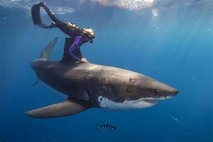 Ocean Ramsey  U2013 Shark Gallery