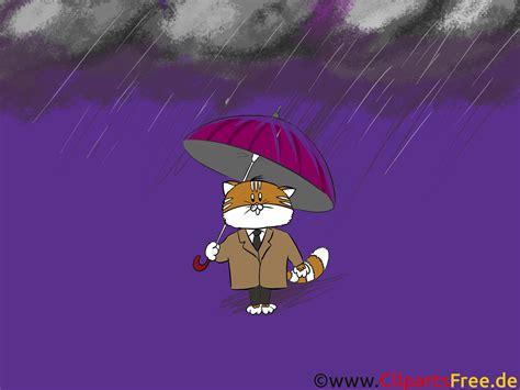 hintergrundbilder herbst katze mit regenschirm