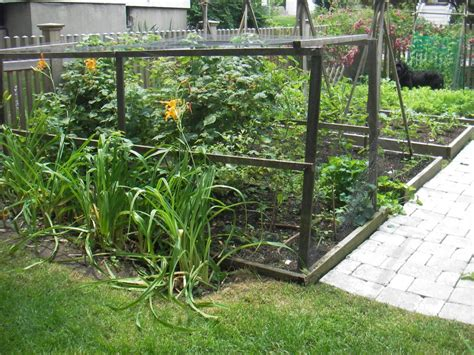 bird netting for garden how netting for vegetable gardens is