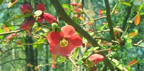 How To Plan Your Winter Flower Garden
