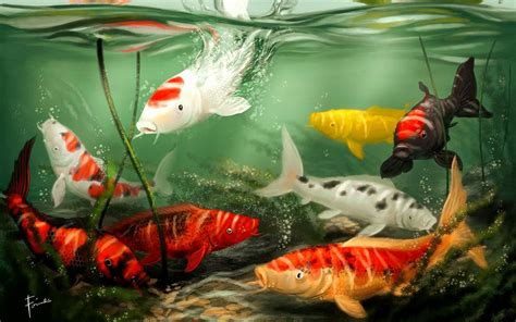 hd koi fish wallpaper wallpapersafari