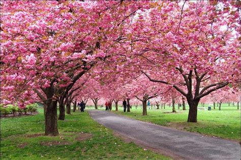 nyc botanical gardens percutian musim bunga eh