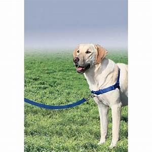 Easy Walk Nylon Harness by Premier - Royal Blue with Same ...