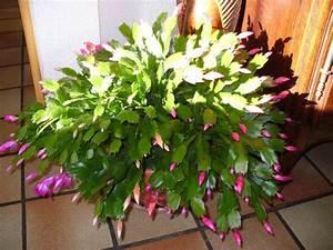Entretien Plantes Grasses : plante grasse appartement collegecalvet66 ~ Melissatoandfro.com Idées de Décoration