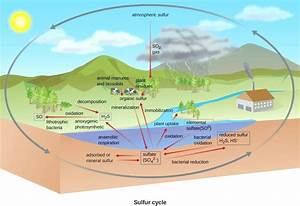 Diagram  Saltwater Ecosystem Diagram