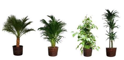 le pour plante interieur plante depolluantes d interieur l atelier des fleurs