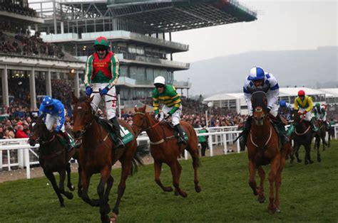 racing horse cheltenham tips