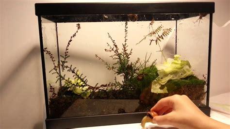 comment faire un terrarium comment faire un terrarium avec des escargots