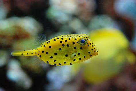 poisson eau douce aquarium tropical 100 images aquarium pour poisson d eau douce poisson