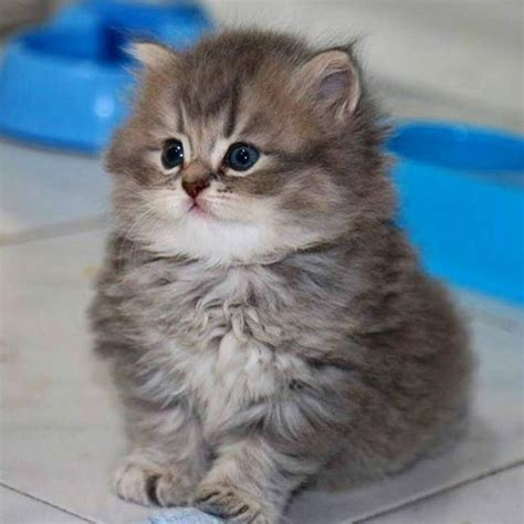 34 Pics Of Cute Kittens That Will Make Your Day Mojly