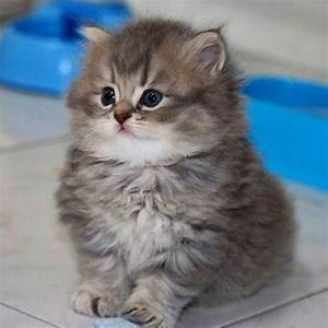 Best 25+ Cute baby cats ideas on Pinterest | Baby cats ...
