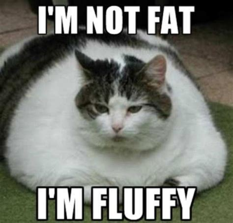 Fat Cat Meme - 1000 images about its so funny on pinterest fluffy cat after christmas and big cats