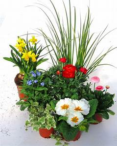 Pflanzen Kübel : pflanzen set f r schale und k bel pflanzen versand harro ~ Pilothousefishingboats.com Haus und Dekorationen