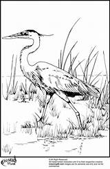 Stork Coloring Pages Teamcolors Colors Getcolorings Printable Bookmark Url Bird Title Read sketch template