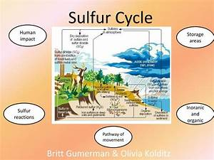 Ppt - Sulfur Cycle Powerpoint Presentation