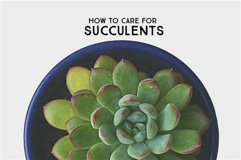 how to take care of a succulent learn the basics on how to care for succulents