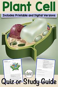Plant Cell Quiz Or Study Guide