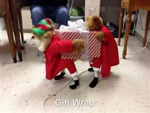TOP 10 Funny Dog Costumes