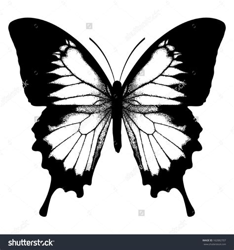 farfalle clipart papilio butterfly clipart clipground