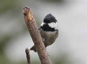 Najmniejsze Ptaki Polski