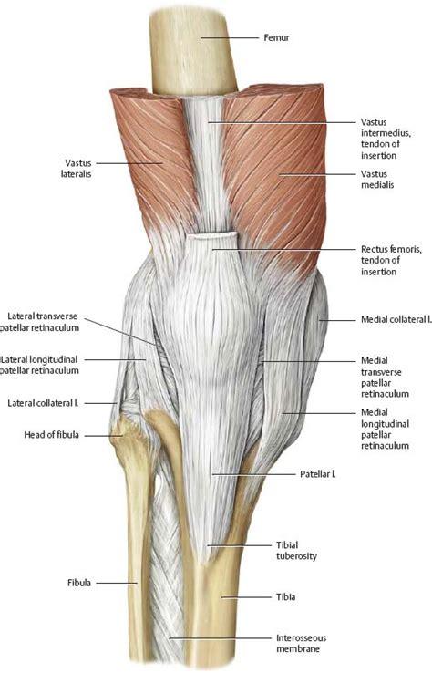 Patellar Retinaculum Anatomy