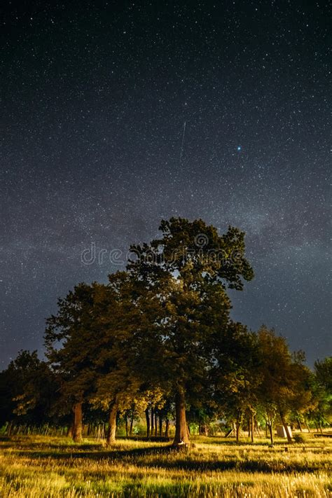 Green Trees Oak Woods In Park Under Night Starry Sky With
