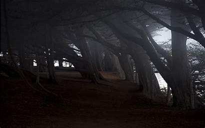 Dark Woods Wallpapers Background Backgrounds Pixelstalk